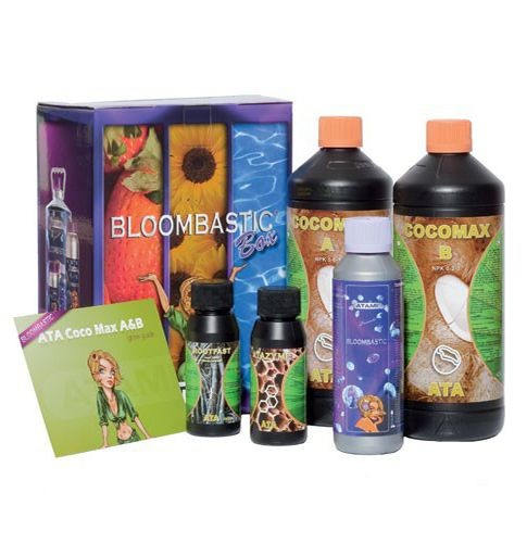 Kit Bloombastic Box Coco