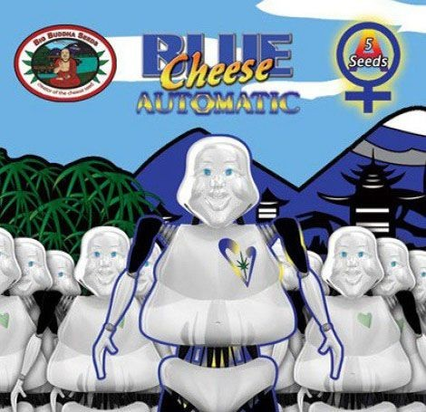 Graines Blue Cheese