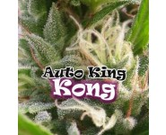 AUTO KING KONG Dr Underground