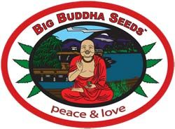 Graines Big Buddha Seeds
