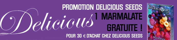 Promotion Delicious Seeds